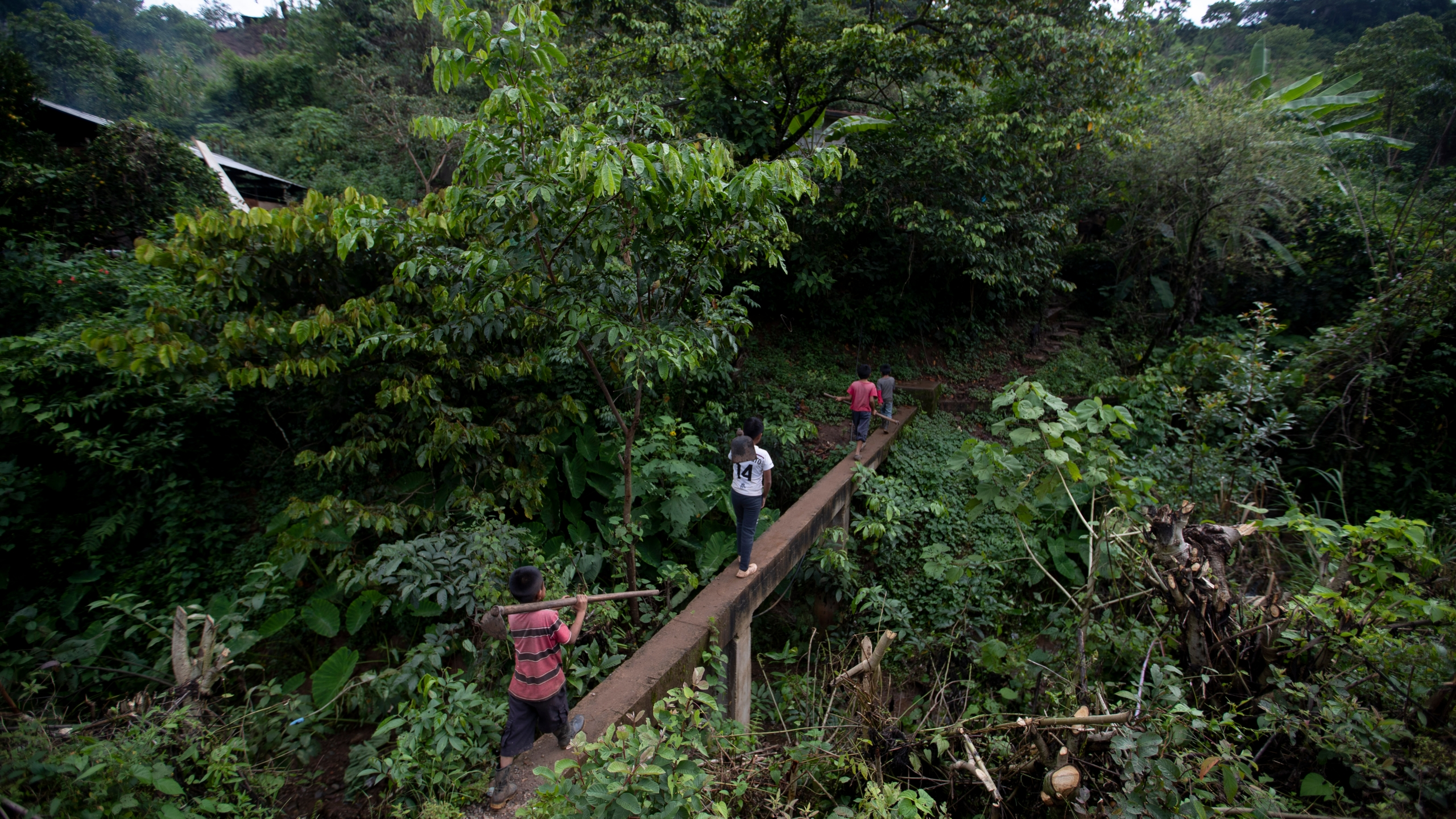 Juan Gabriel Vazquez, center, and his brothers walk to the corn fields to work in the community of Nuevo Yibeljoj in Chiapas state, Mexico, Friday, Sept. 11, 2020. (Eduardo Verdugo/AP)