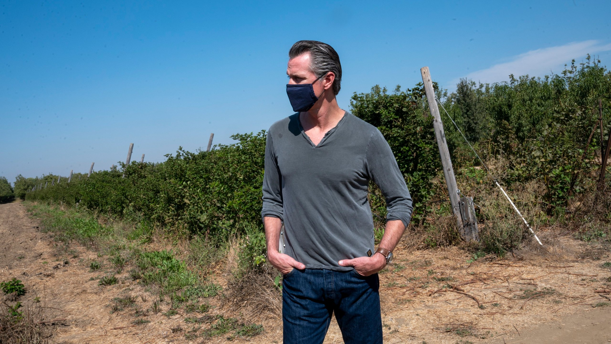 California Gov. Gavin Newsom tours Sierra Orchards walnut farm in Winters, Solano County, on Oct. 7, 2020. (Renée C. Byer / The Sacramento Bee via Associated Press)