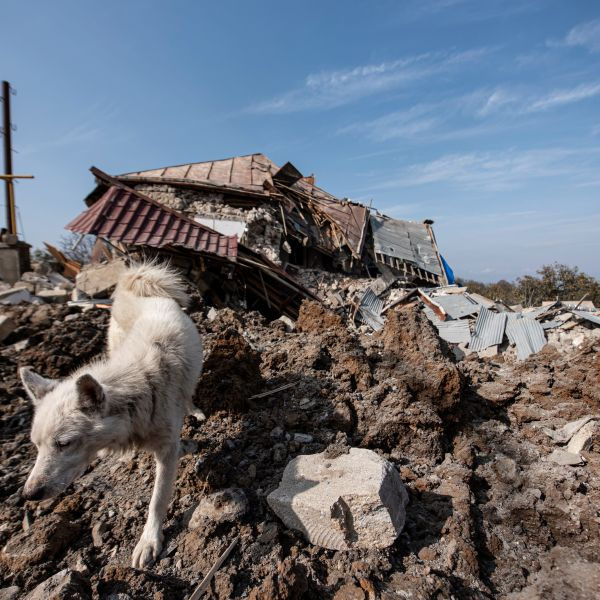 A dog walks in front of a destroyed house following recent shelling during the ongoing military conflict between Armenia and Azerbaijan over the breakaway region of Nagorno-Karabakh, in the town of Shusha on Oct. 28, 2020. (Davit GHAHRAMANYAN / AFP via Getty Images)