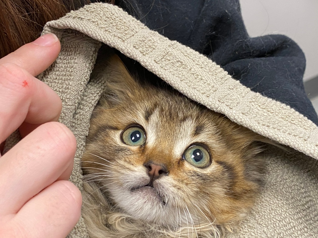 Man uses warm water to save kitten frozen to truck tire in Colorado