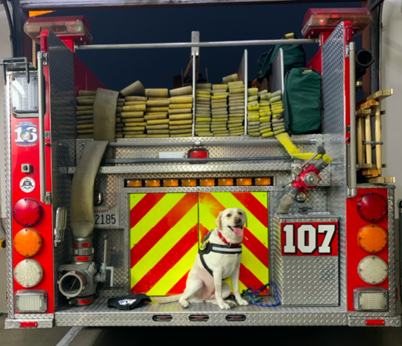 Labrador retriever Echo appears in a photo released by the L.A. County Fire Department on Oct. 13, 2020.