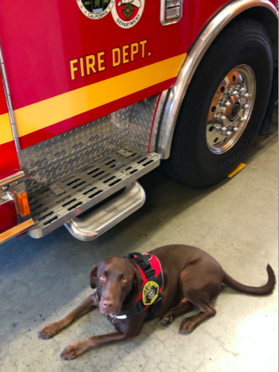 Labrador retriever Milo appears in a photo released by the L.A. County Fire Department on Oct. 13, 2020.
