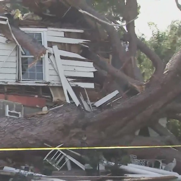 A tree fell through a home in Chino Hills on Oct. 26, 2020. (KTLA)
