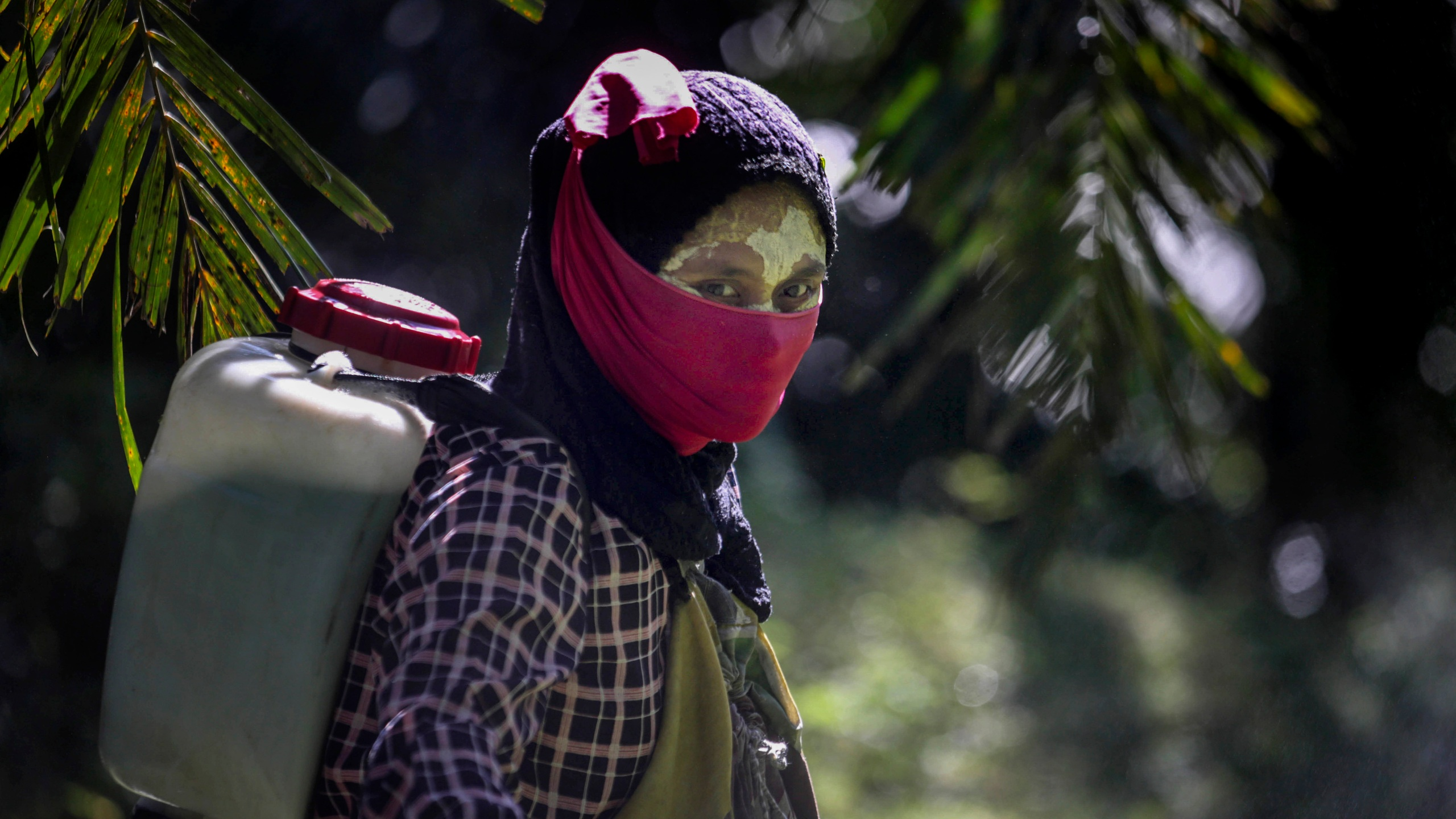 A female worker walks with a pesticide sprayer on her back at a palm oil plantation in Sumatra, Indonesia, on Sept. 8, 2018. Some workers use a yellow paste made of rice powder and a local root as a sunblock. (Binsar Bakkara / Associated Press)