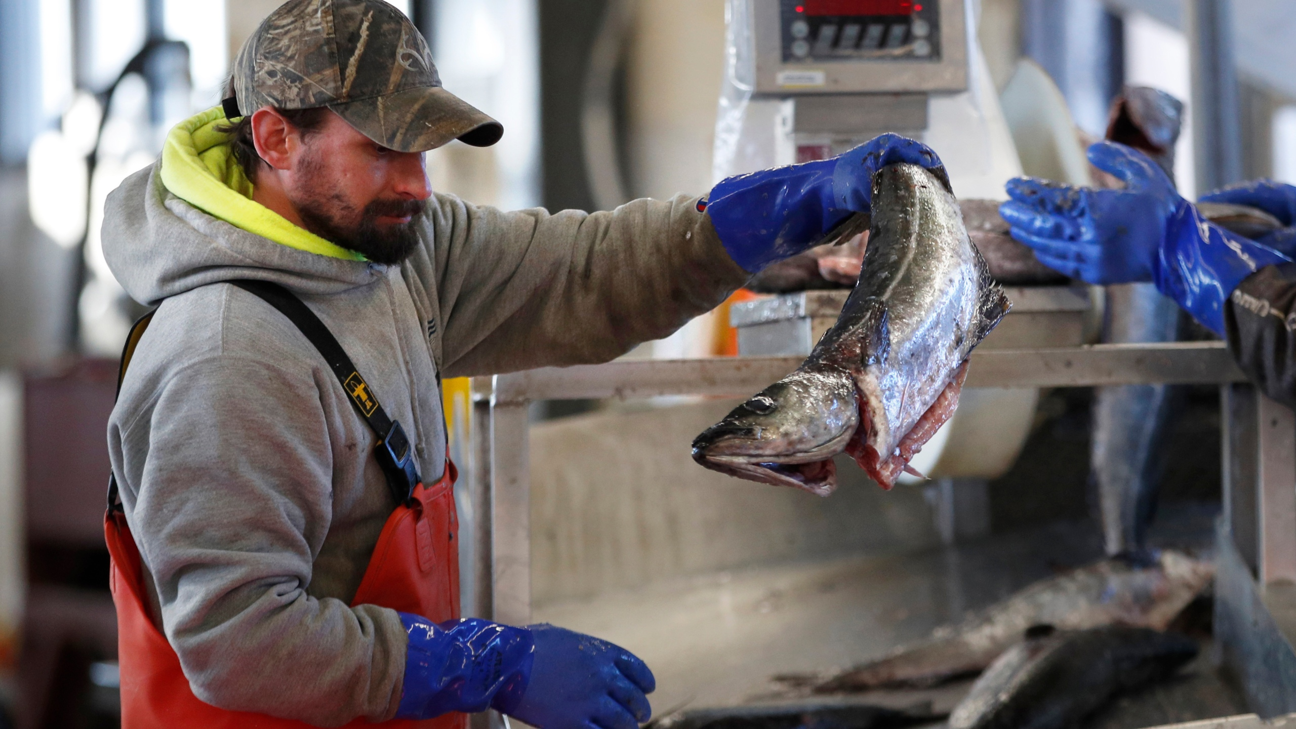 In this March 25, 2020, file photo, a worker weighs and sorts pollack at the Portland Fish Exchange in Portland, Maine. (Robert F. Bukaty/AP Photo)