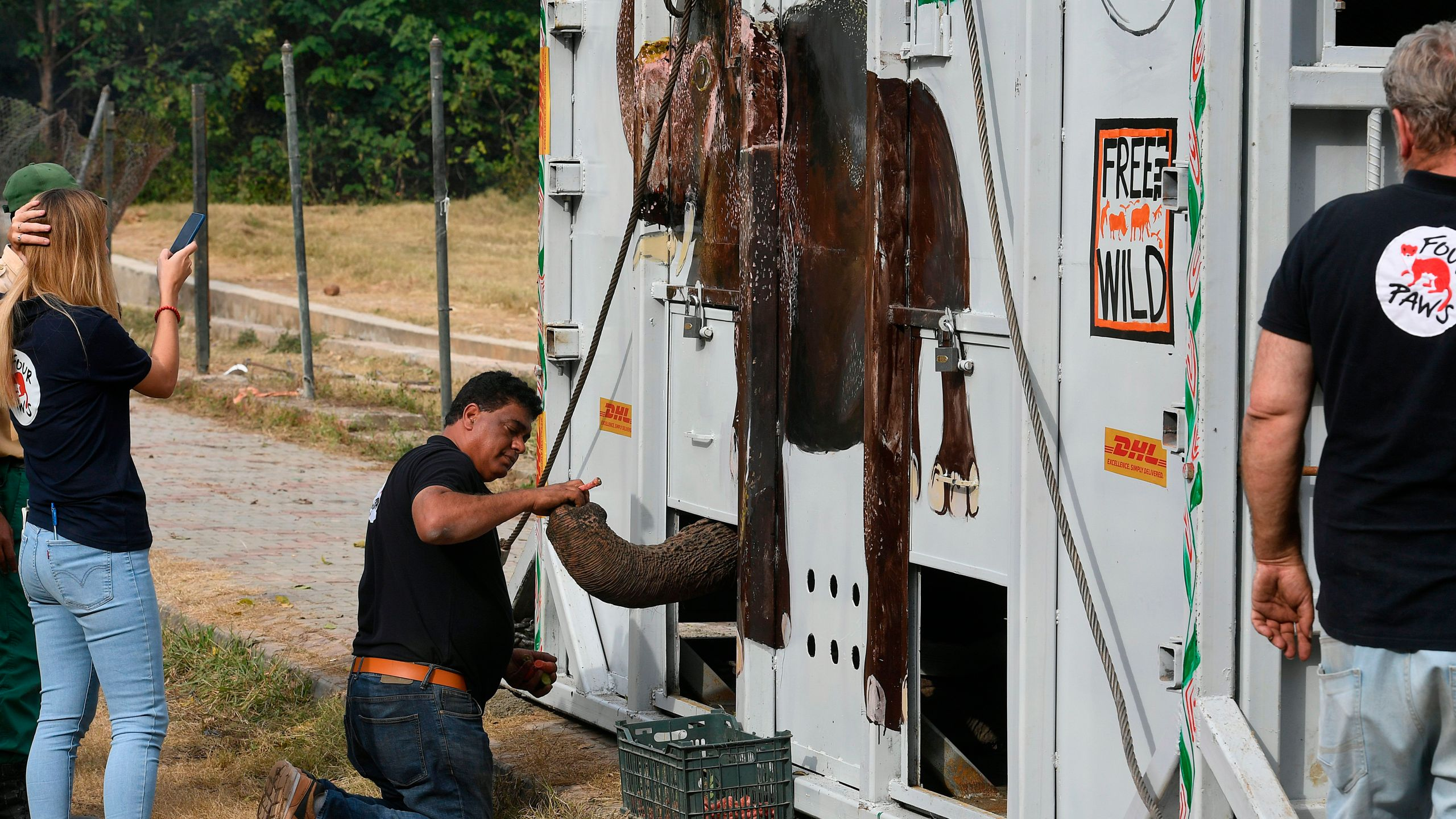 "Amir Khalil (C), a veterinarian and director of the project development for Four Paws International, feeds Kaavan, Pakistan's only Asian elephant, in a crate prior to transport it to a sanctuary in Cambodia, at the Marghazar Zoo in Islamabad on November 29, 2020. - Following years of public outcry and campaigning by American pop star Cher, the ""world's loneliest elephant"" was poised on November 29 to embark on a mammoth journey from Pakistan to a sanctuary in Cambodia. (AAMIR QURESHI/AFP via Getty Images)"