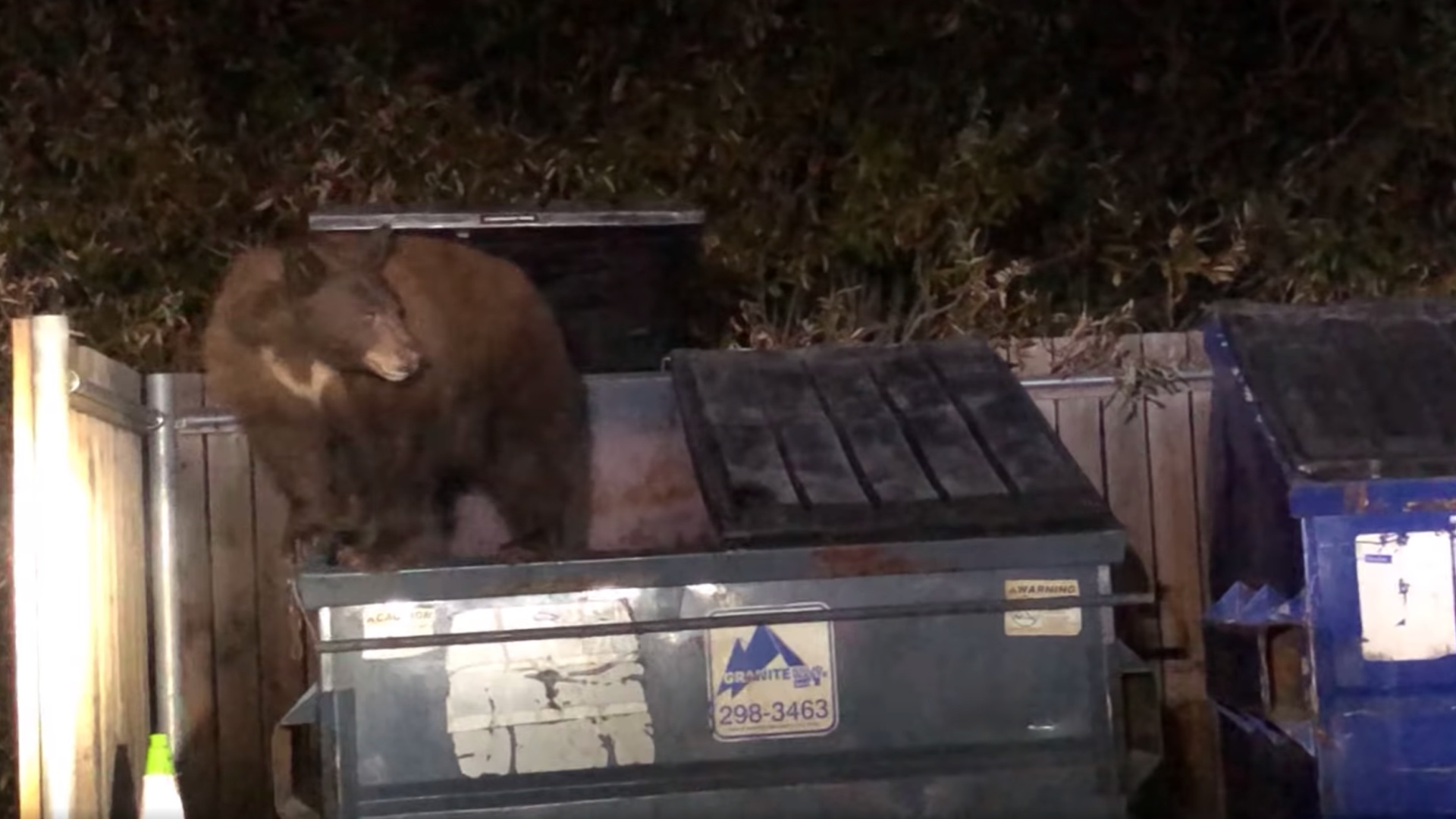 A pair of hungry bears were caught scavenging for food in dumpsters at Shaver Lake, California, on Nov. 22. (Fresno County Sheriff's Office via Storyful)