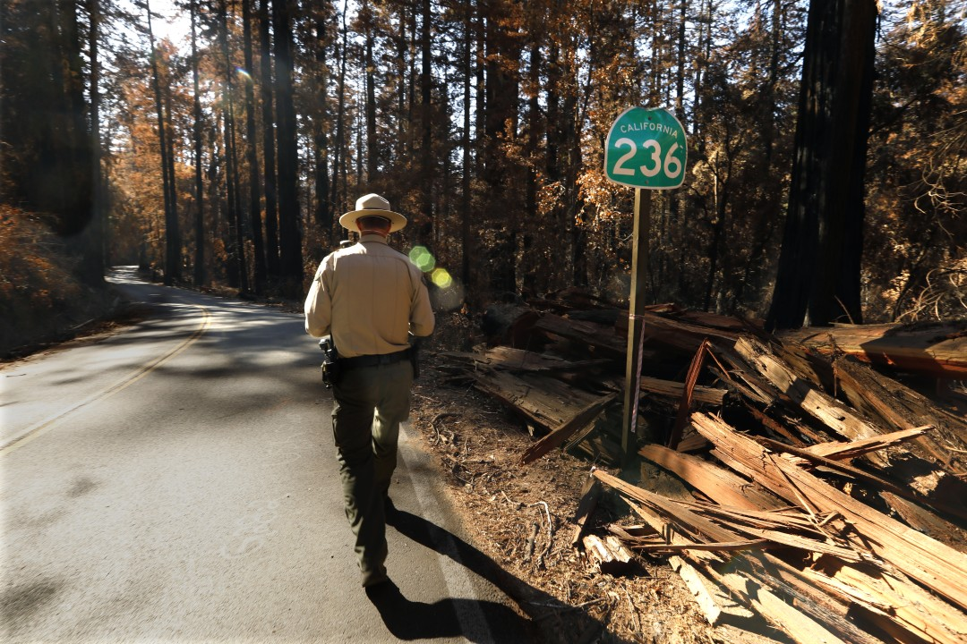 Gabe McKenna, a state parks safety officer and ranger at Big Basin Redwoods State Park walks along Highway 236 in this undated photo. (Carolyn Cole / Los Angeles Times)
