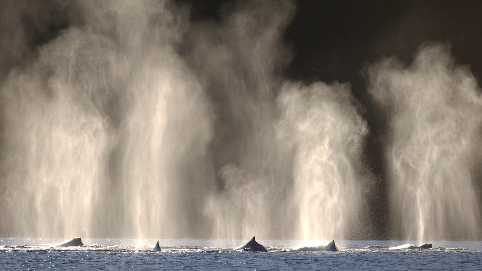Humpback whales are seen in a file photo. (iStock/Getty Images Plus)