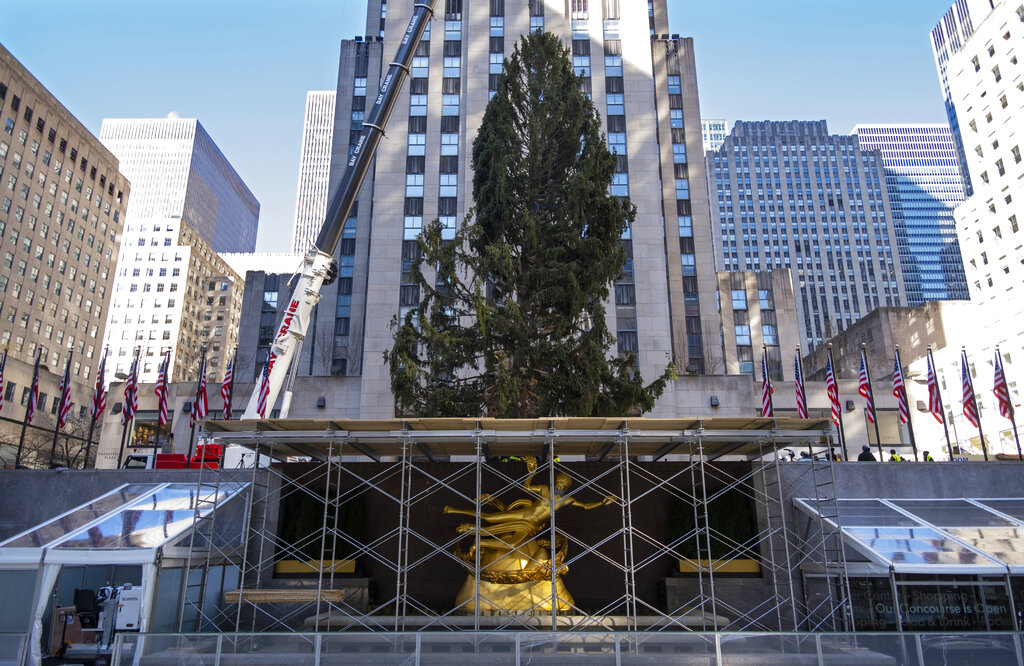 In this Saturday, Nov. 14, 2020, file photo, the 2020 Rockefeller Center Christmas tree, a 75-foot tall Norway spruce that was acquired in Oneonta, N.Y., is secured on a platform at Rockefeller Center, in New York. (AP Photo/Craig Ruttle, File)