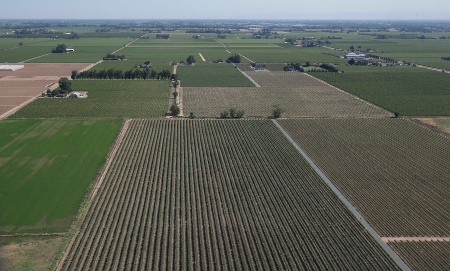 This April 28, 2015, file photo, shows an aerial view of a grape vineyard near Lodi, Calif. In San Joaquin County, part of California's vast Central Valley that produces most of the country's fruits and vegetables, the coronavirus is the leading cause of death this year and things will only worsen as infections skyrocket and hospitals fill beyond capacity. Like most of California, the city of Lodi is under a broad shutdown order as Christmas approaches, and its residents and businesses are grappling with how to stay safe while keeping their economy operating. (AP Photo/Rich Pedroncelli, File)