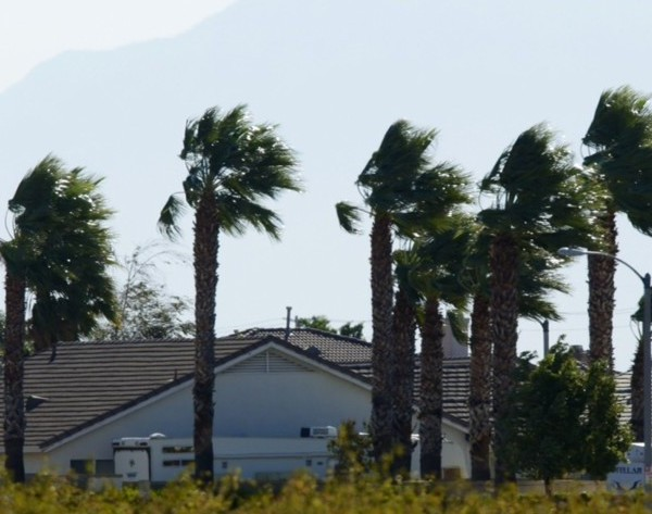 An undated file photo shows palm tress amid strong winds. (Irfan Khan / Los Angeles Times)