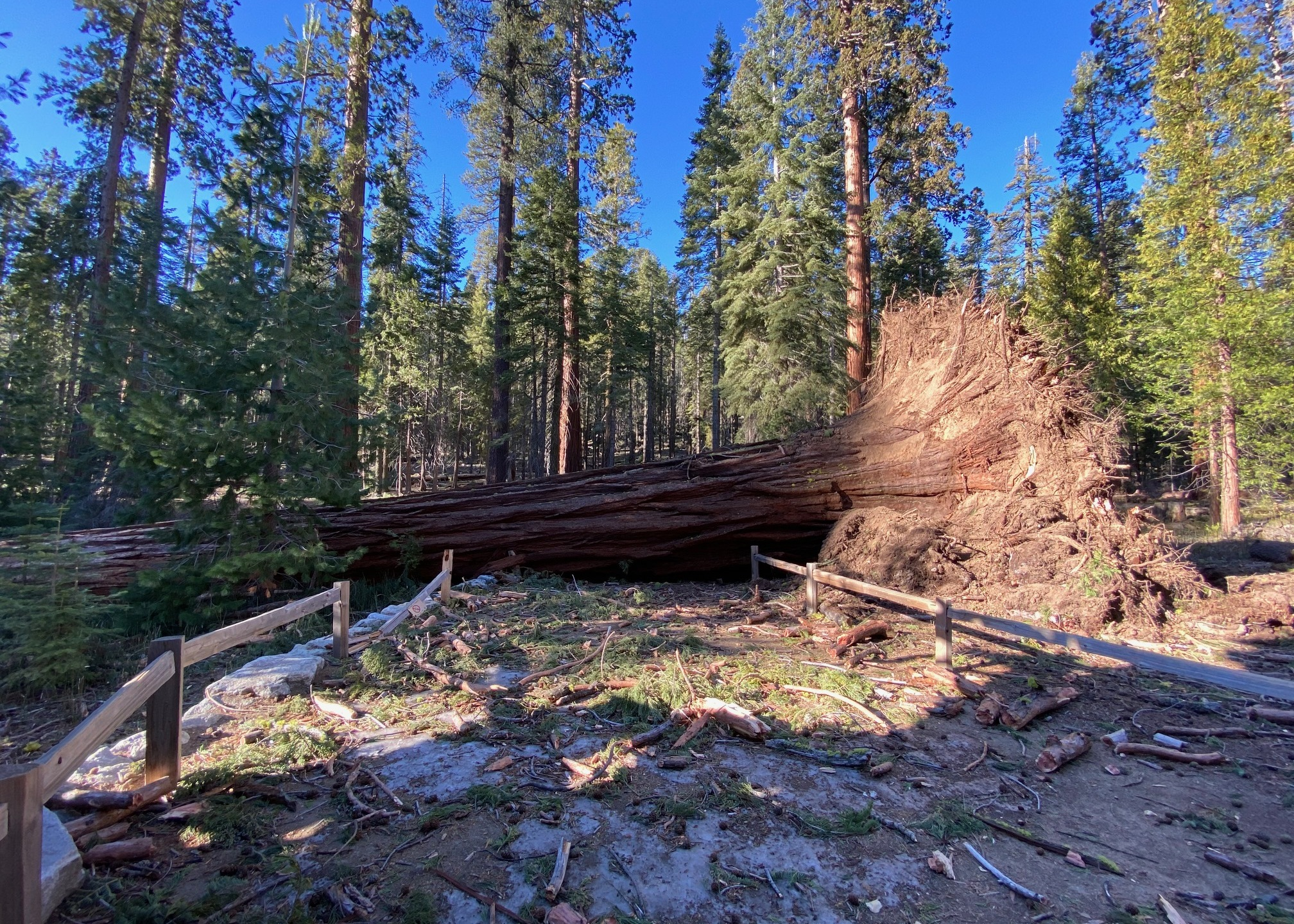 The Yosemite National Park twitter account shared this photo on Jan. 21, 2020, showing damage from high winds.