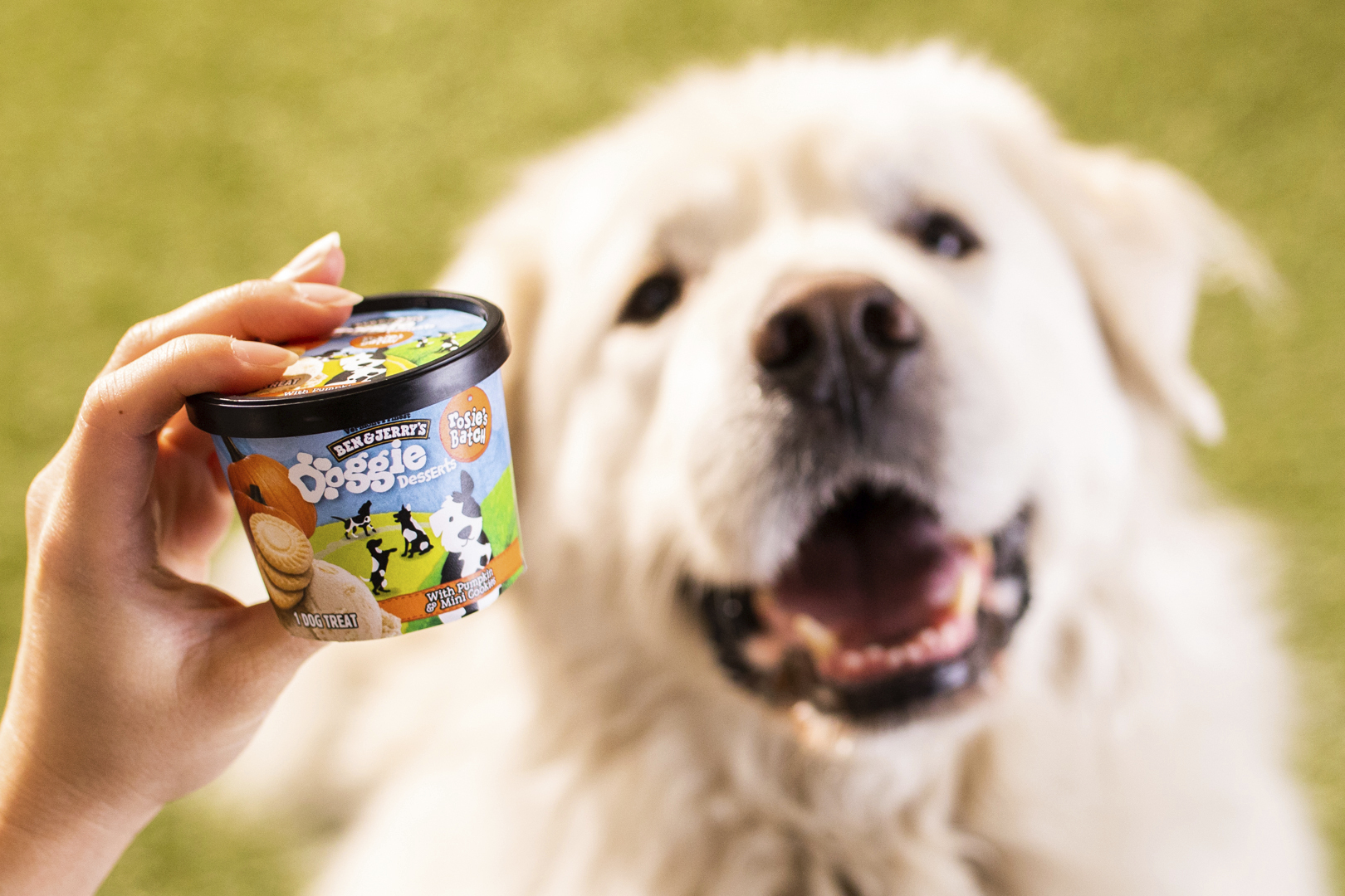 This photo provided by Ben & Jerry's shows Ben & Jerry's dog treats. (Ben & Jerry's via AP)