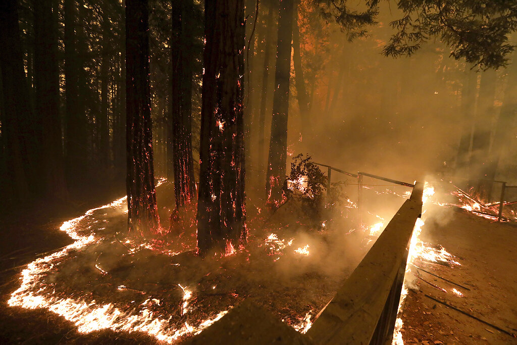 In this Aug. 20, 2020, file photo The CZU August Lightning Complex fire consumes trees and a fence along Empire Grade Road in the Santa Cruz Mountains community of Bonny Doon near Santa Cruz, Calif. (Shmuel Thler/The Santa Cruz Sentinel via AP, File)
