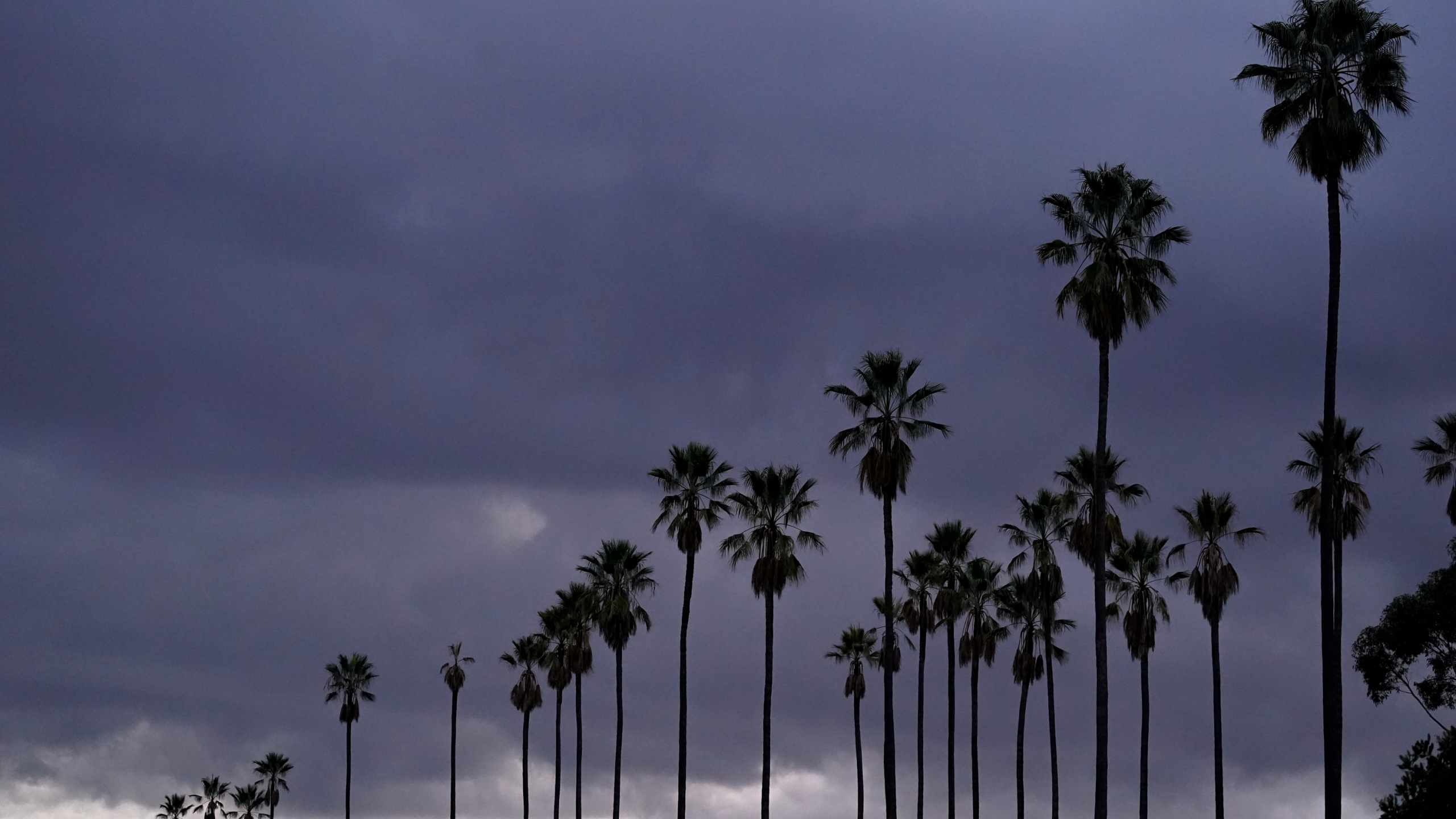 Clouds move over palm trees at Elysian Park in Los Angeles, Sunday, Jan. 24, 2021. (AP Photo/Damian Dovarganes)