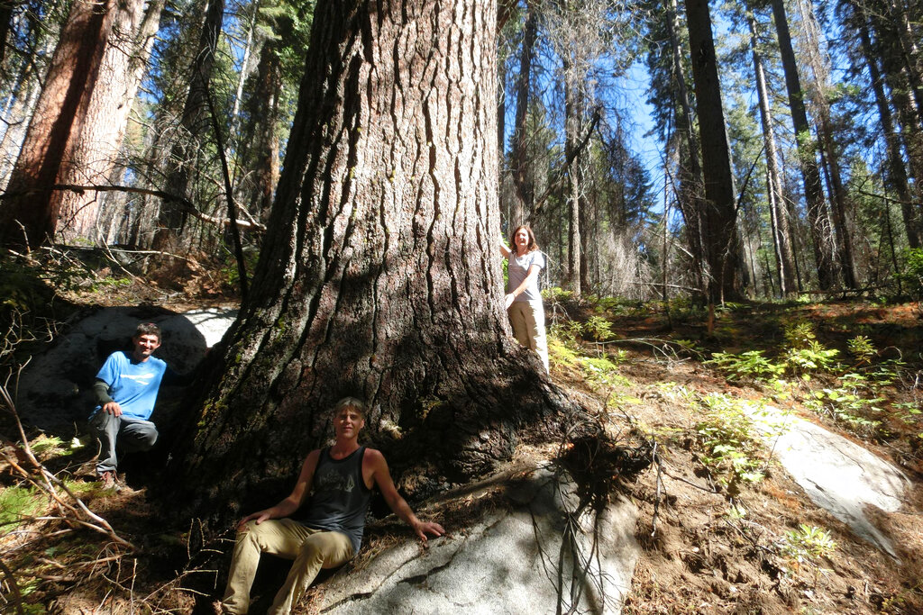 This undated picture provided by Sugar Pine Foundation shows tree hunters, from left, Ben Fetzer, Michael W. Taylor, Maria Mircheva posing with the second tallest sugar tree in Yosemite, Calif. (Sugar Pine Foundation via AP)