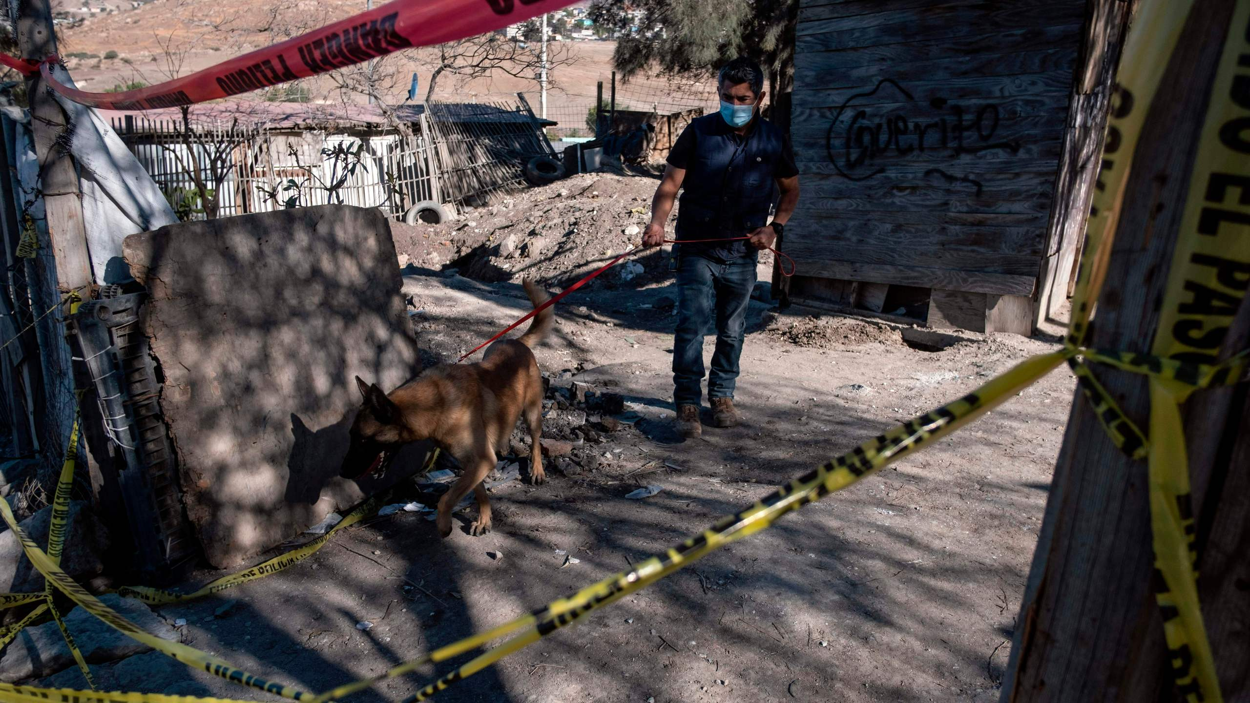 Julio Cesar Diaz, a volunteer dedicated to train dogs, walks with his dog looking for potential search spots as members of a group searching for missing people search human remains at a yard of a house located on the Maclovio Rojas area in Tijuana, Mexico, on January 10, 2021. (GUILLERMO ARIAS/AFP via Getty Images)