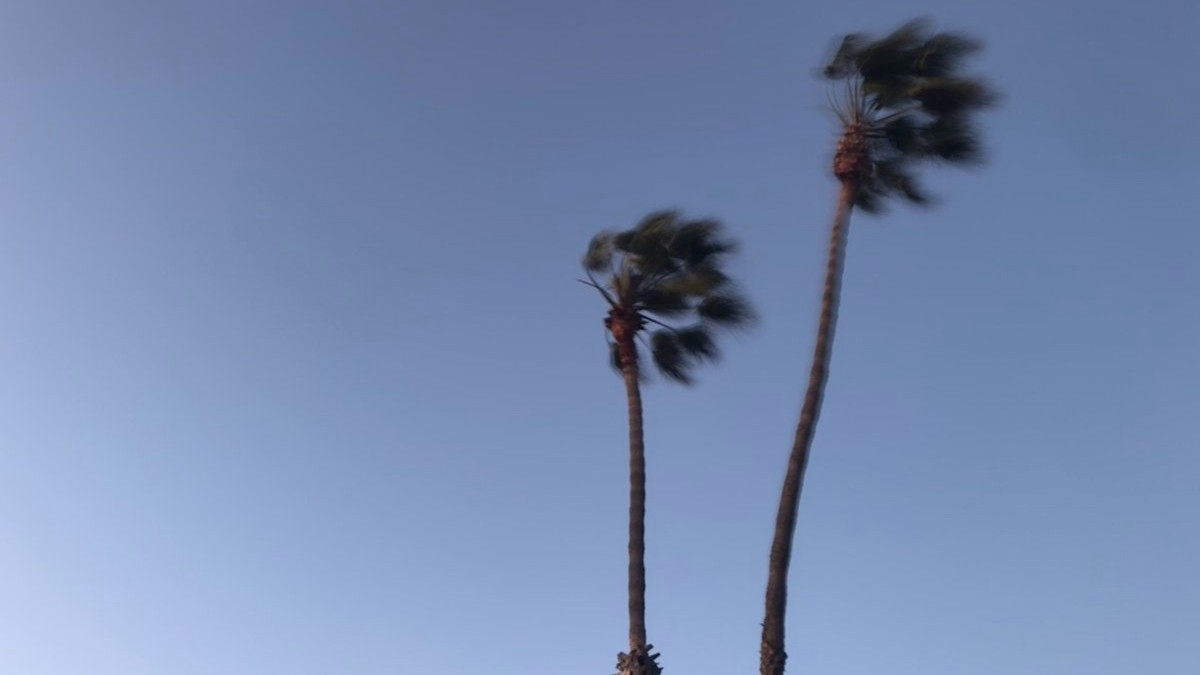 A photo of wind-blown palm trees was tweeted out by NWS on Jan. 15, 2021.