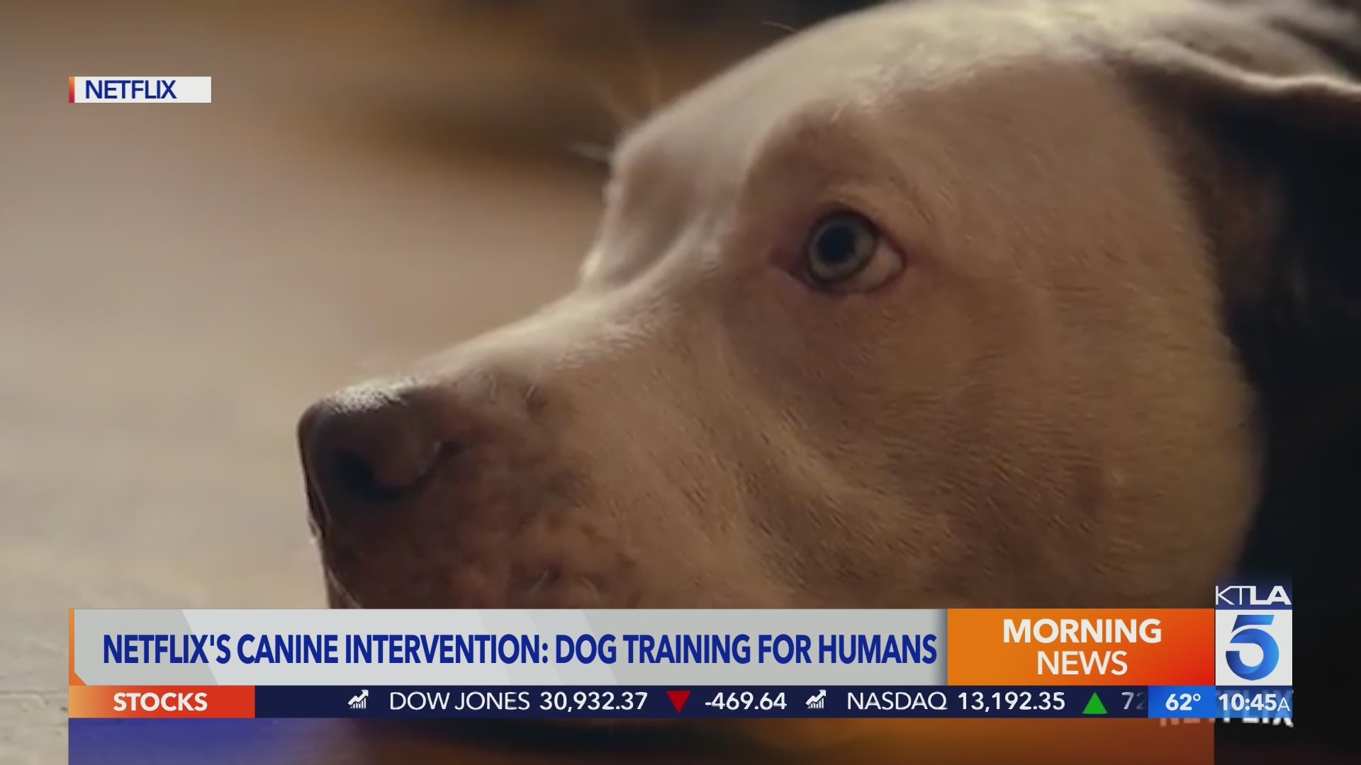 Canine Intervention hosted by dog trainer Jas Leverette