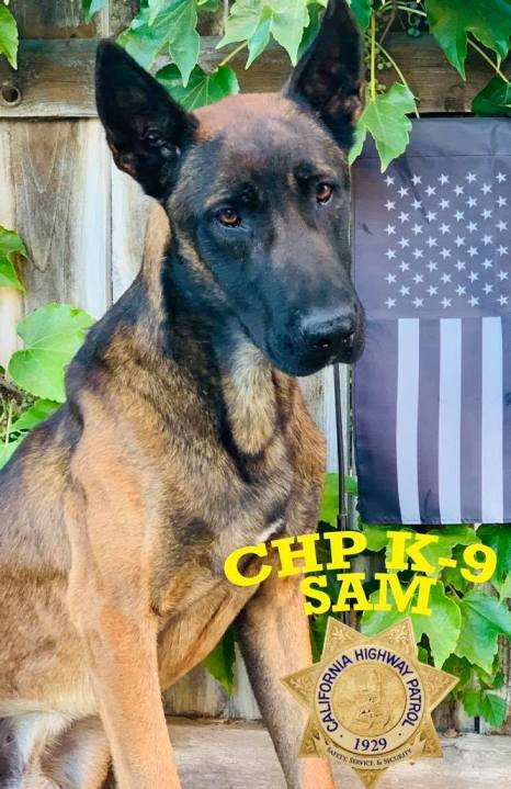 California Highway Patrol K-9 Officer Sam is seen in a photo released by the agency on March 29, 20201.