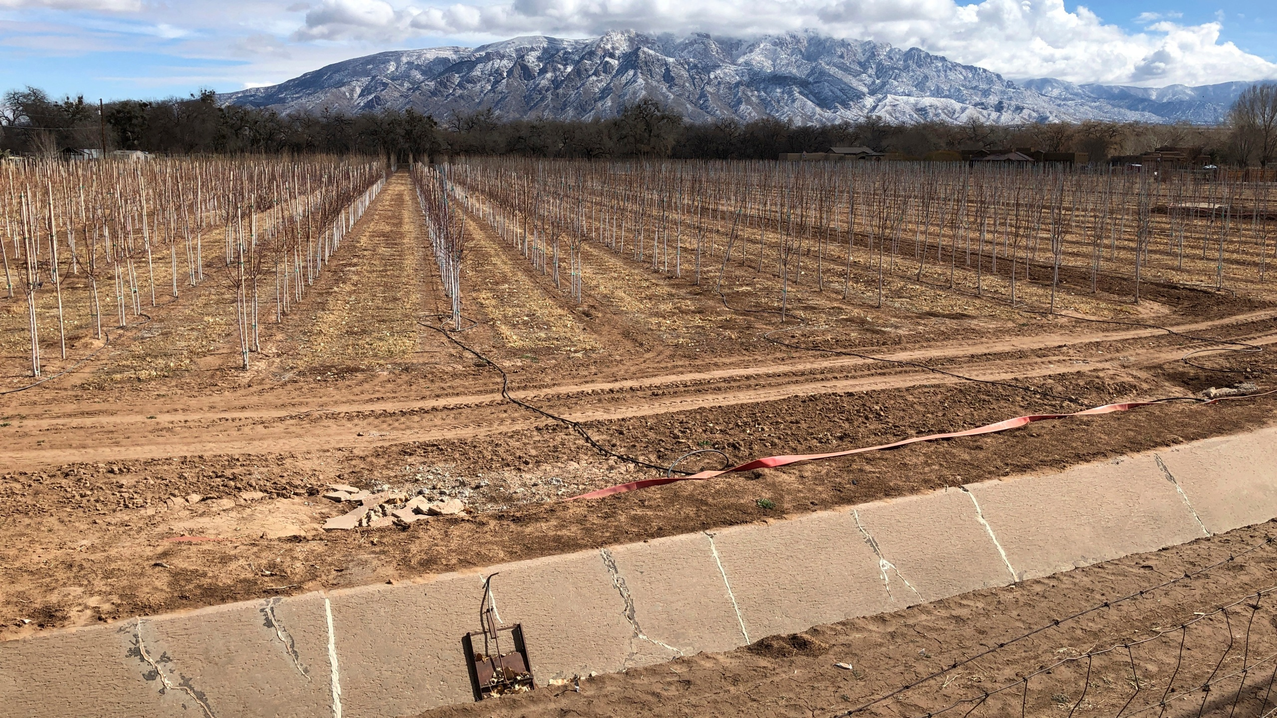 This Feb. 17, 2021 file photo shows an empty irrigation canal at a tree farm in Corrales, N.M., with the Sandia Mountains in the background, as much of the West is mired in drought, with New Mexico, Arizona, Nevada and Utah being among the hardest hit. (AP Photo/Susan Montoya Bryan)