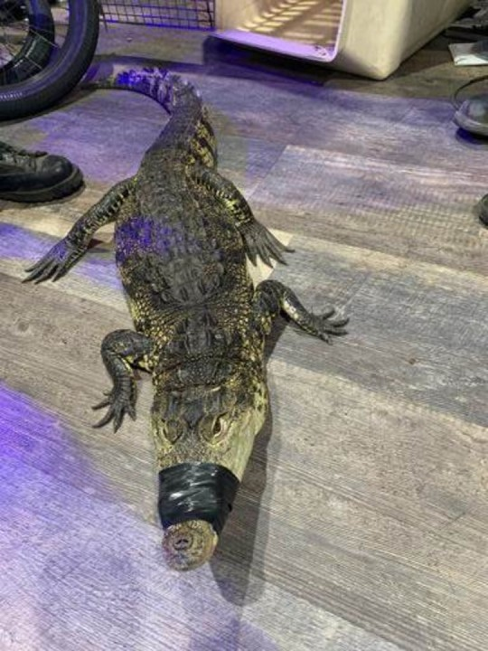 Oxnard police released this photo of the crocodile.