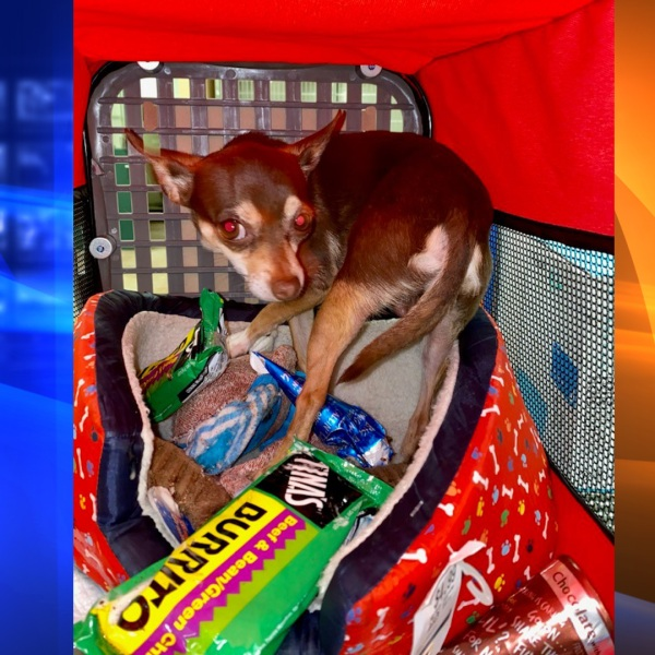 A small dog was found in a hot car in Palm Desert on April 1, 2021. (Riverside County Animal Services)