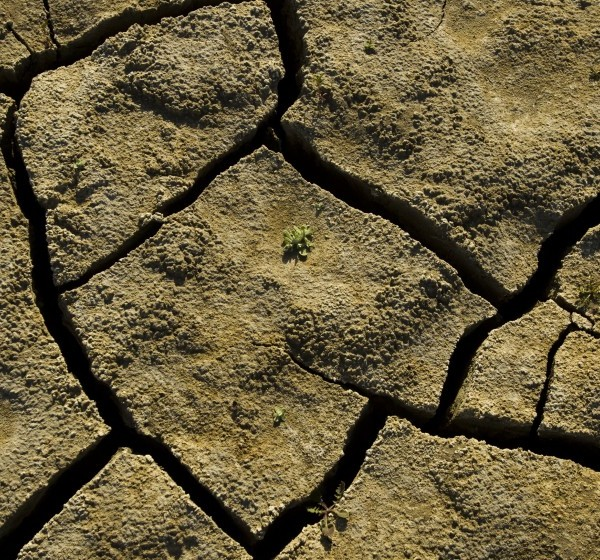 """A tiny plant struggles to emerge from a cracked, dry lake bed in California. Some researchers believe the region is decades into an emerging """"megadrought"""" (Allen J. Schaben / Los Angeles Times)"""