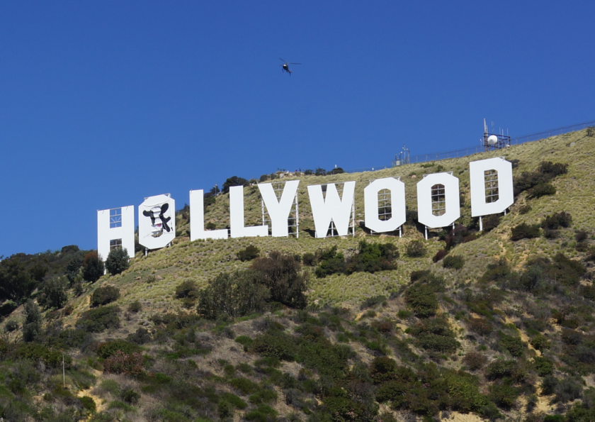 Three men were arrested after the image of a cow was hung over one of the letters of the Hollywood sign.(Steve Alper)