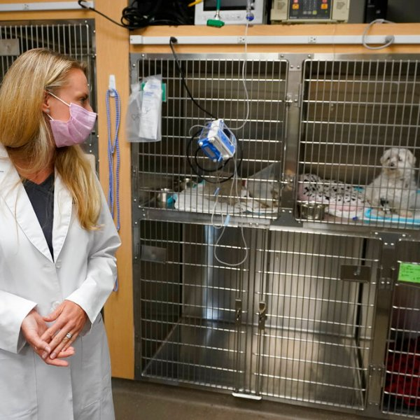 Dr. Katarzyna Ferry, left, looks over at dog named Wendy who is being treated for a flare-up of Addison's disease, Monday, April 12, 2021, at the Veterinary Specialty Hospital of Palm Beach Gardens in Palm Beach Gardens, Fla. (AP Photo/Wilfredo Lee)