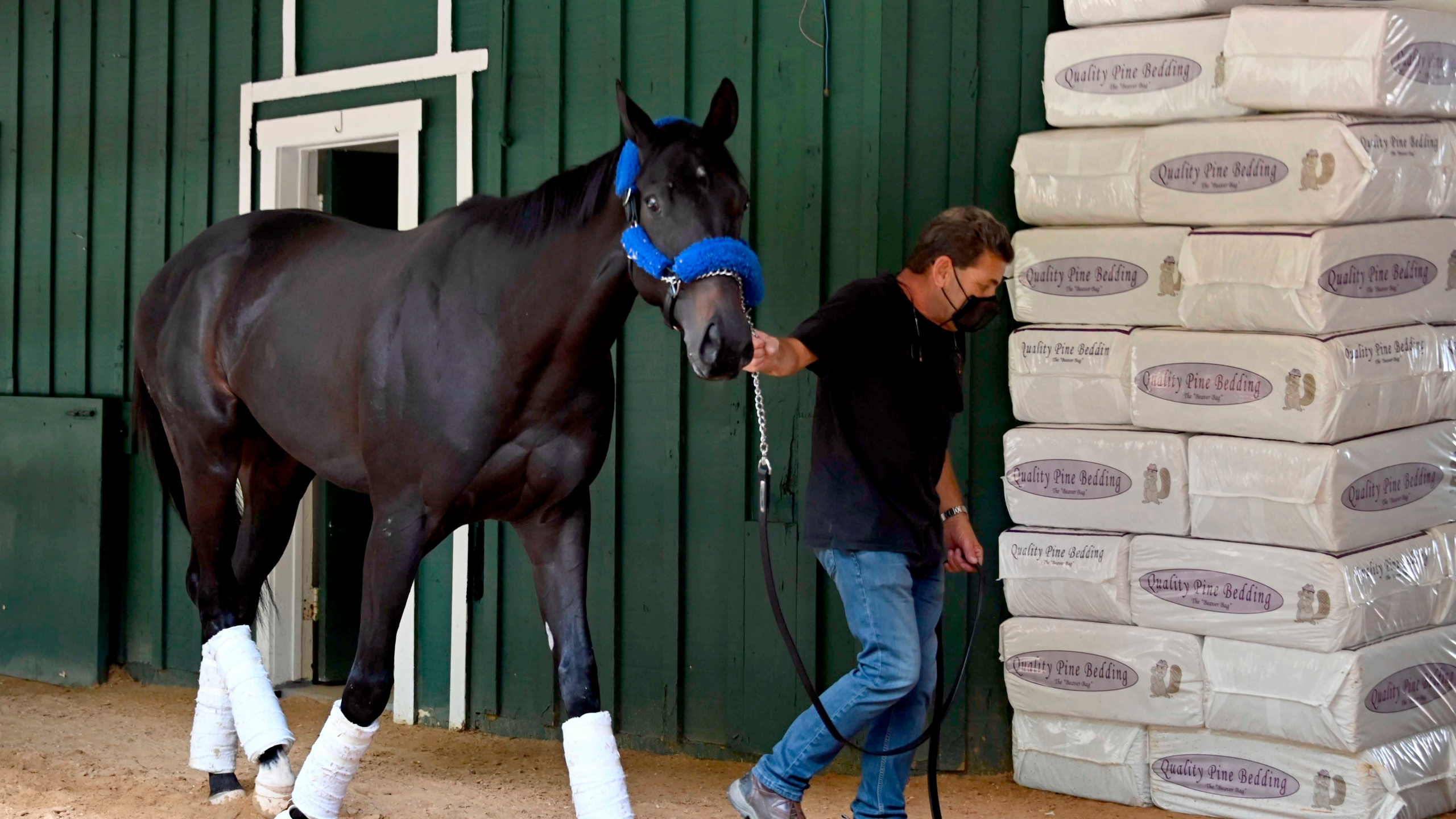 Kentucky Derby winner Medina Spirit walks around the Stakes Barn with assistant trainer Jimmy Barnes after arriving at Pimlico Race Course Monday, May 10, 2021. (Lloyd Fox/The Baltimore Sun via AP)./The Baltimore Sun via AP)