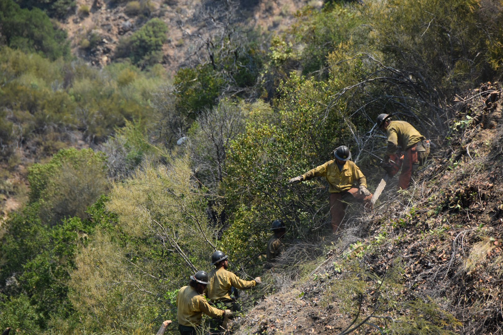 Crews work in the area of Willow fire in Los Padres National Forest on June 21, 2021. (Los Padres National Forest)