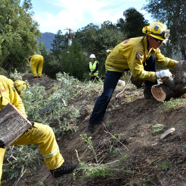 In this Nov. 20, 2019, file photo a fire prevention crew hauls away sections of a tree they cut down near Redwood Estates, Calif. California Gov. Gavin Newsom has vastly overstated wildfire prevention work done under his administration according to an investigation by Capital Public Radio published Wednesday, June, 23, 2021. (AP Photo/Matthew Brown, File)