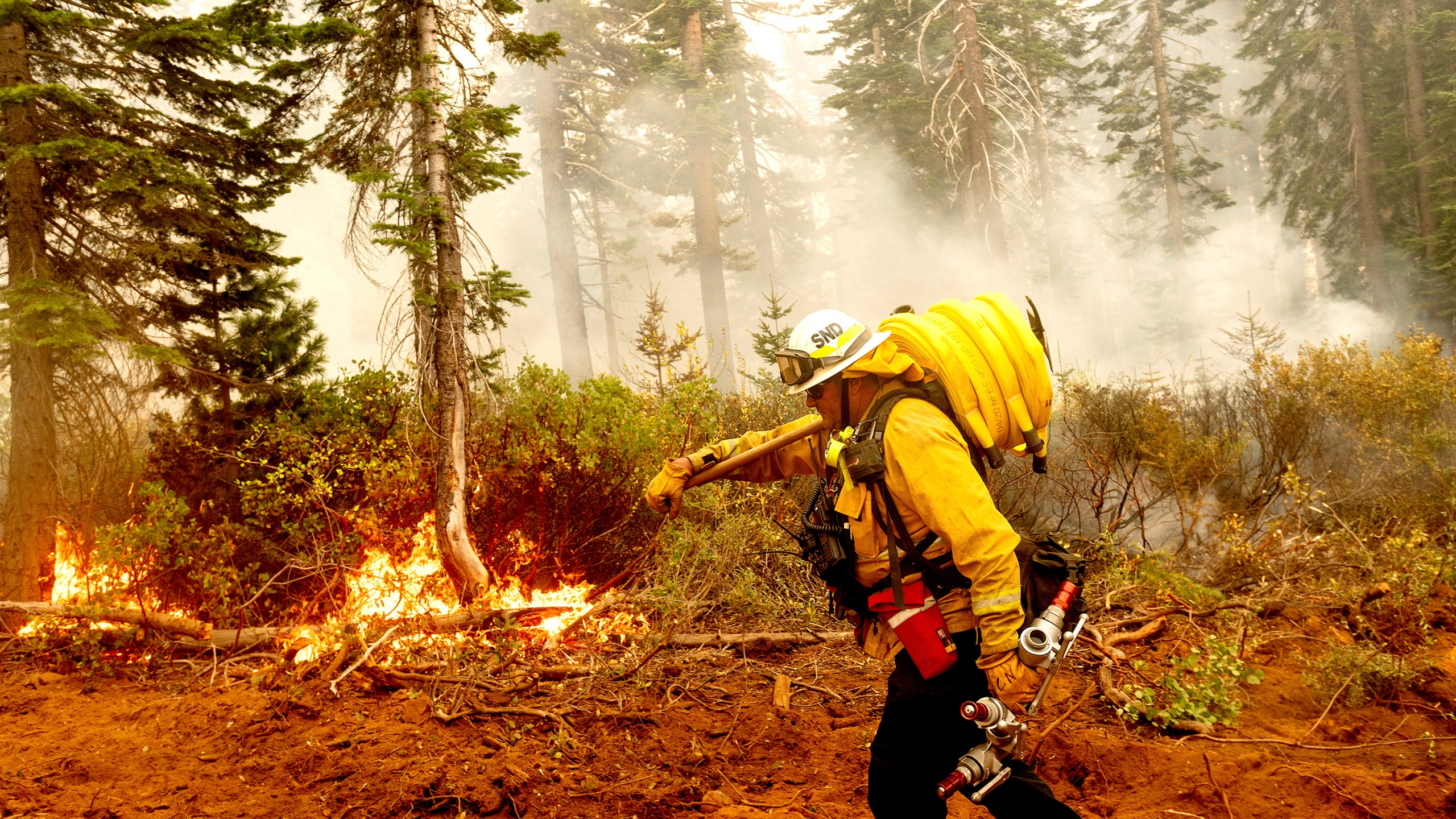 In this Sept. 14, 2020, file photo Cal Fire Battalion Chief Craig Newell carries a hose while battling the North Complex Fire in Plumas National Forest, Calif. (AP Photo/Noah Berger,File)