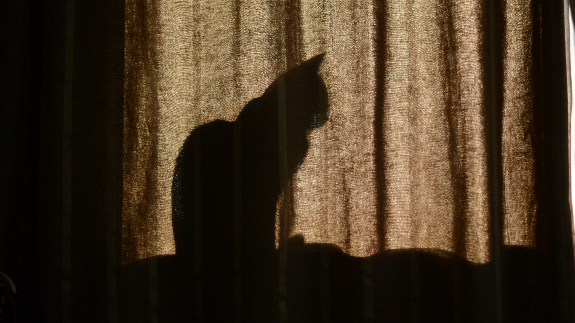 A cat is seen sitting in a windowsill in the file image. (Getty Images stock photo)