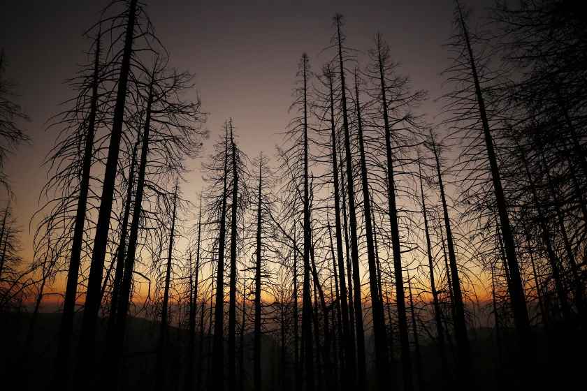 A sunset is obscured by smoke-filled skies near Alder Creek Grove where sequoia trees had grown on this Sierra Nevada ridge top for well over 500 years. (Al Seib/Los Angeles Times)