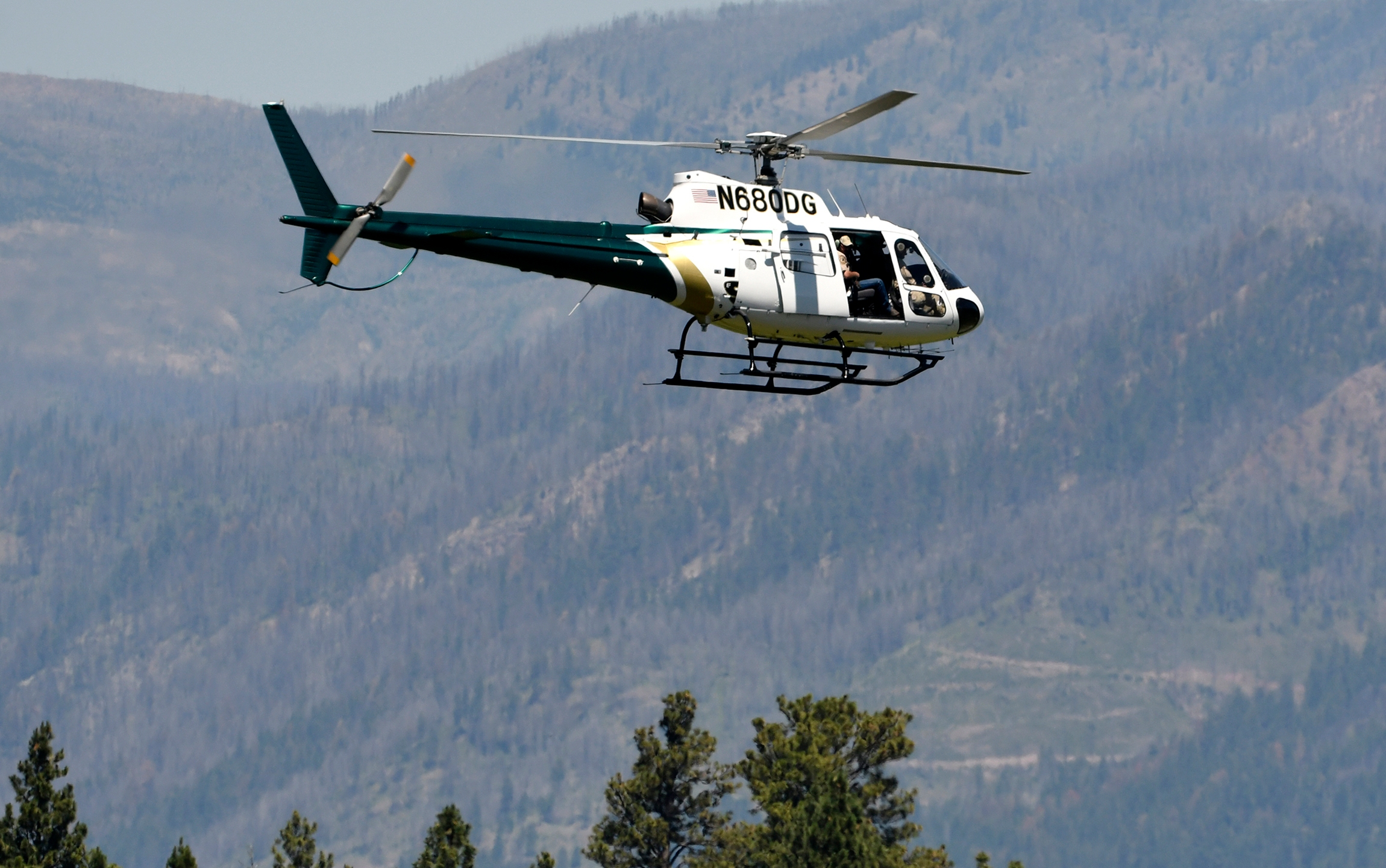 A helicopter from Montana Fish, Wildlife and Parks flies around the Ovando, Mont., area on July 6, 2201, in search of a bear that killed a camper early that morning. (Tom Bauer / The Missoulian via Associated Press)