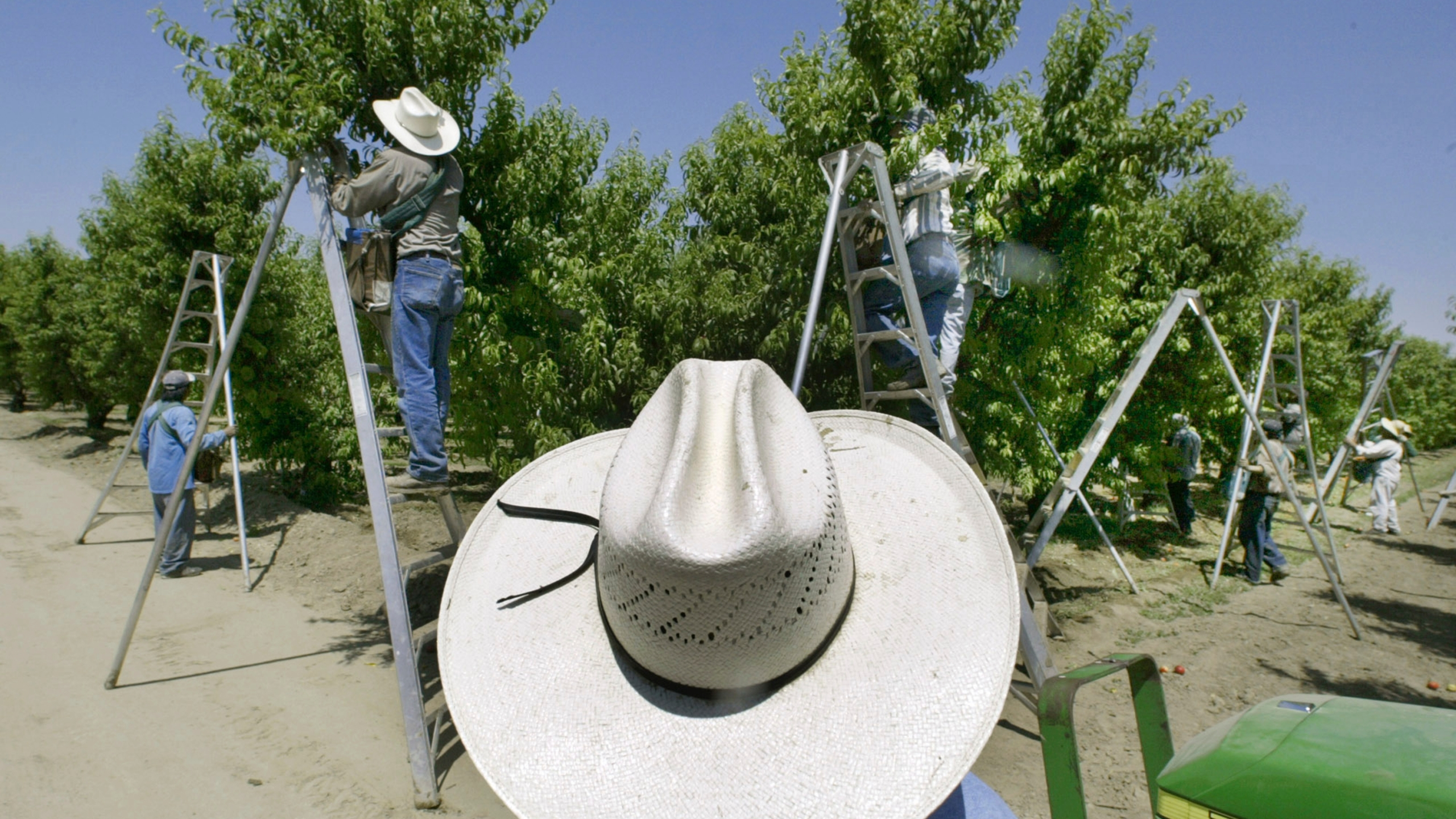 In this May 13, 2004, file photo, a foreman watches workers pick fruit in an orchard in Arvin, Calif. On Monday, July 12, 2021 lawsuits were filed in four California counties seeking potential class-action damages from Dow Chemical and its successor company over a widely used bug killer containing Chlorpyrifos that has been linked to brain damage in children. Chlorpyrifos is approved for use on more than 80 food crops, including oranges, berries, grapes, soybeans almonds and walnuts, though California banned the sales of the pesticide last year and ended spraying this year.(AP Photo/Damian Dovarganes, File)