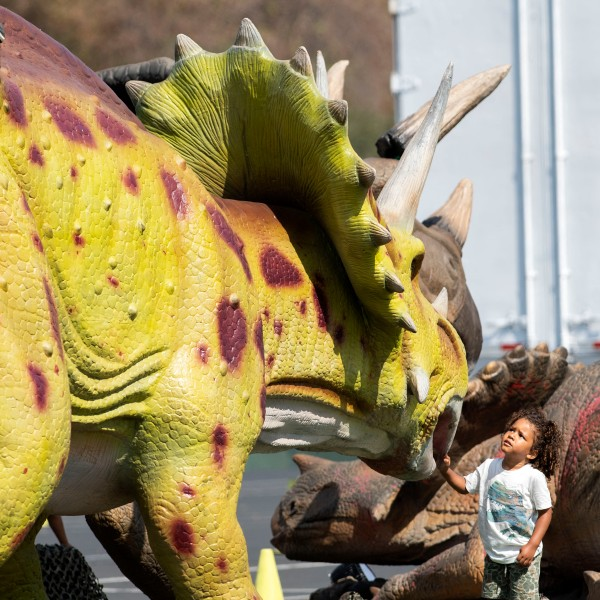 A kid looks at a dinosaur at the Jurassic Quest Drive Thru during a media preview at the Rose Bowl, in Pasadena, California, July 23, 2021. (Valerie Macon/AFP via Getty Images)