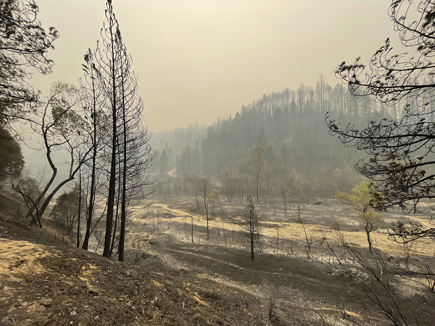 Burned trees and smoke fill the Bear River canyon after the River Fire burned through Friday, Aug. 6, 2021 in Chicago Park, Calif. (Elias Funez/The Union via AP)