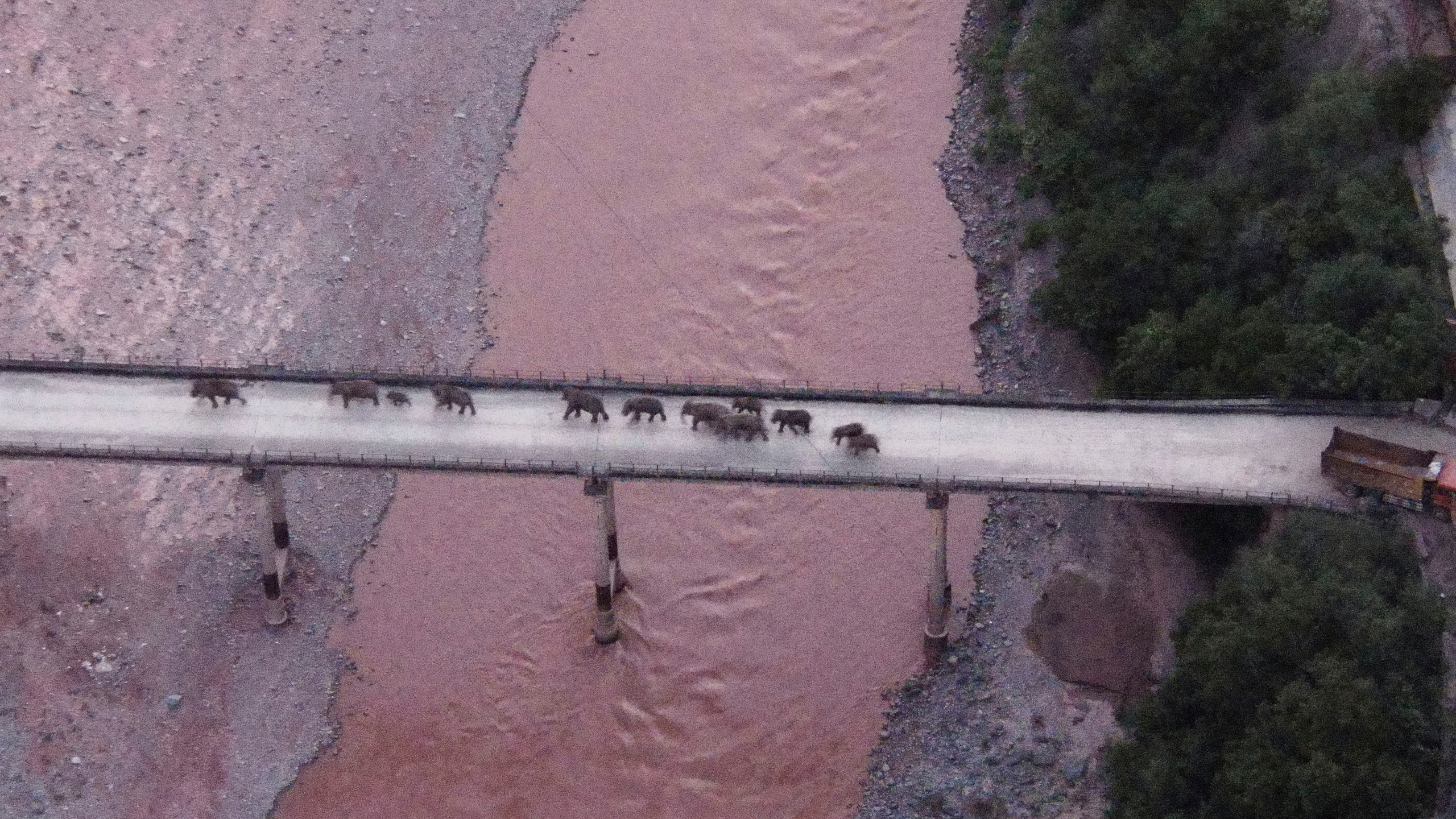 In this photo released by the Yunnan Provincial Command Center for the Safety and Monitoring of North Migrating Asian Elephants, a herd of wandering elephants cross a river using a highway near Yuxi city, Yuanjiang county in southwestern China's Yunnan Province on Aug. 8, 2021. (Via Associated Press)