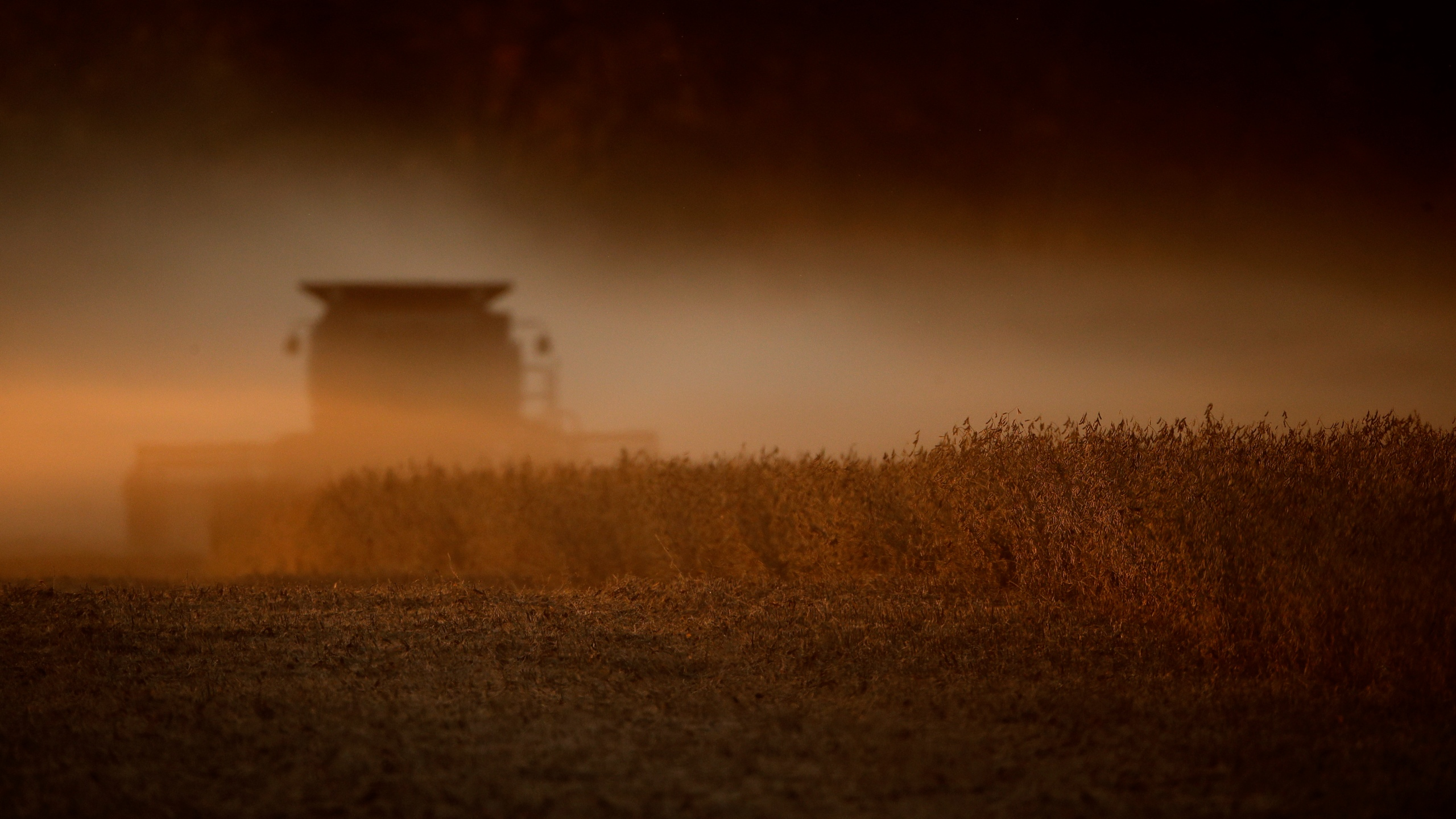 In this Oct. 19, 2019, file photo soybeans are harvested near Wamego, Kan. The Biden administration said on Aug. 18, 2021, that it was banning use of chlorpyrifos, a widely used pesticide long targeted by environmentalists because it poses risks to children and farm workers. (AP Photo/Charlie Riedel, File)