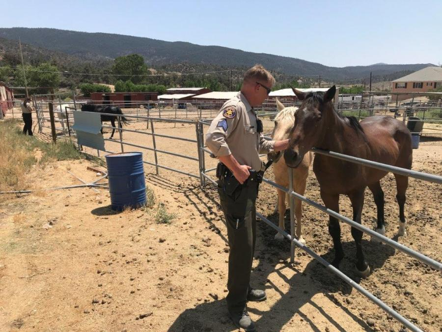 Authorities found well over 200 animals at a Frazier Park property on Aug. 12, 2021, and rescued 50 of them for being kept in inhumane conditions. (Ventura County Sheriff's Office)