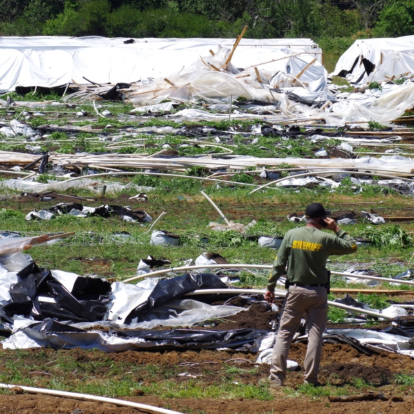 Josephine County Sheriff Dave Daniel stands amid the debris of plastic hoop houses destroyed by law enforcement, used to grow cannabis illegally, near Selma, Ore., on June 16, 2021. (Shaun Hall/Grants Pass Daily Courier via Associated Press)