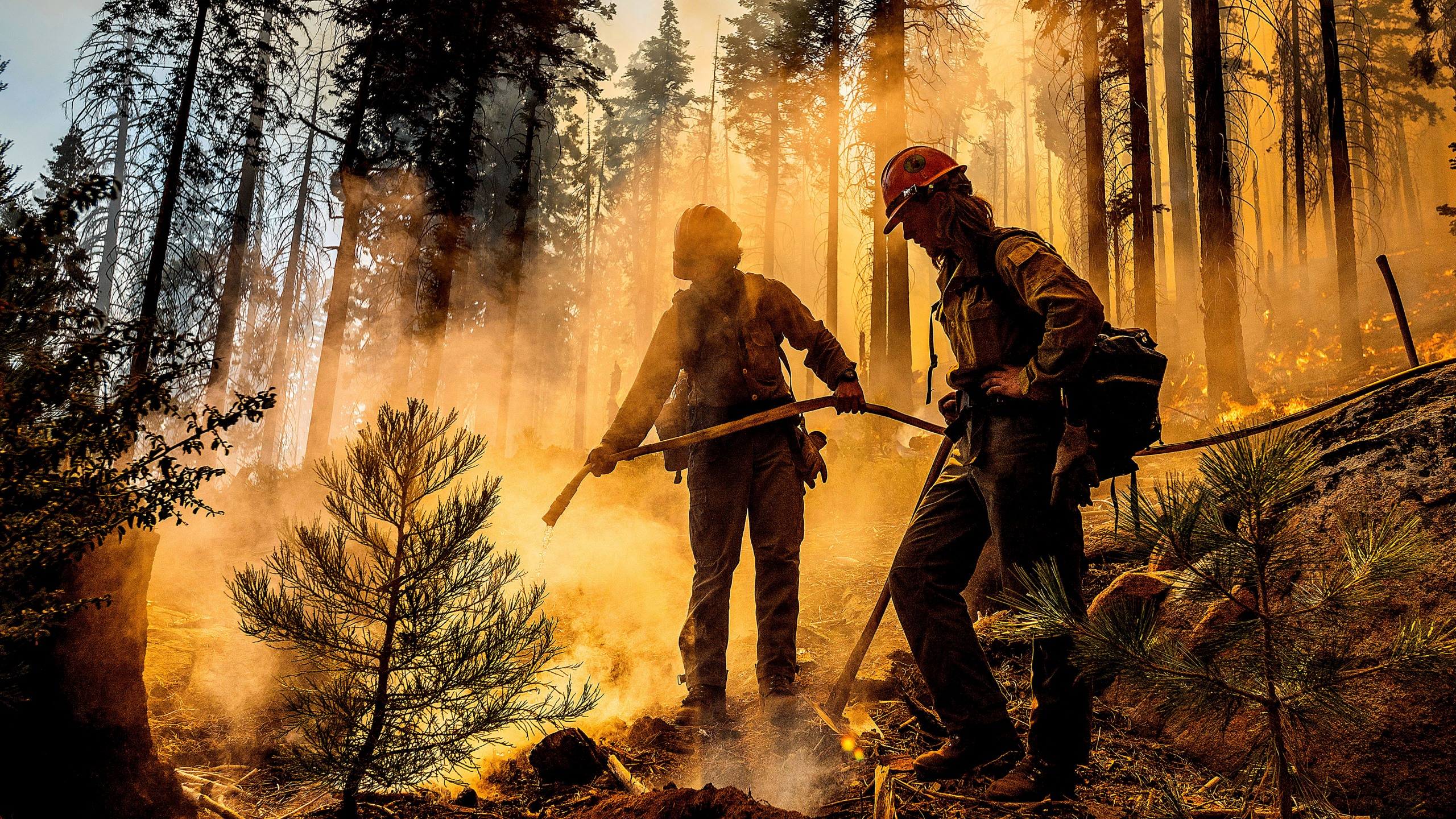 Firefighter Austin Cia sprays water as the Windy Fire burns in the Trail of 100 Giants grove in Sequoia National Forest on Sept. 19, 2021. (Noah Berger / Associated Press)