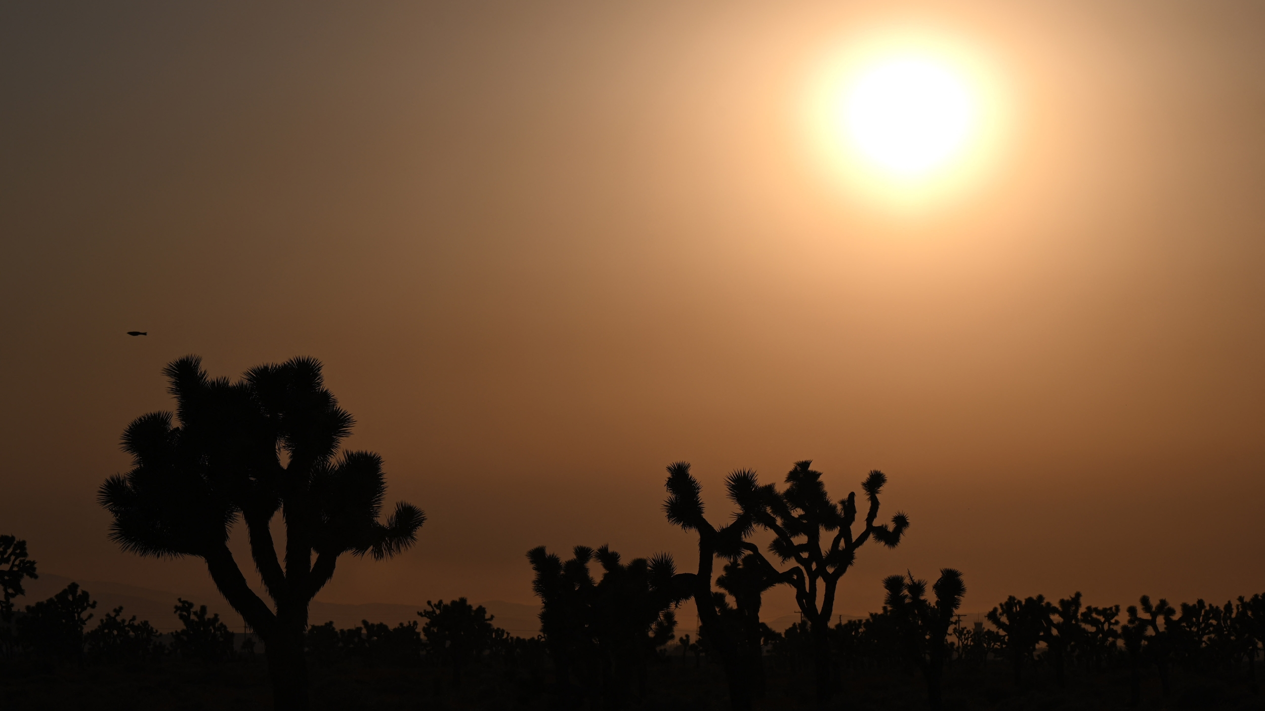 The sun sets behind Joshua Trees in Lancaster, California, where temperatures reached 107 degrees on July 12, 2021. (Robyn Beck / AFP via Getty Images)