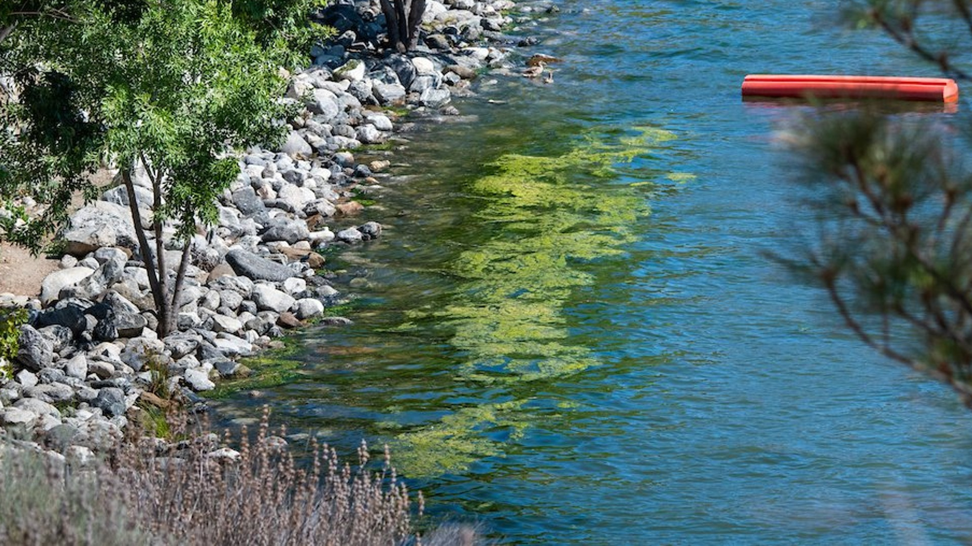 Algae in Pyramid Lake is seen in an image tweeted by the California Department of Water Resources on Sept. 22, 2021.
