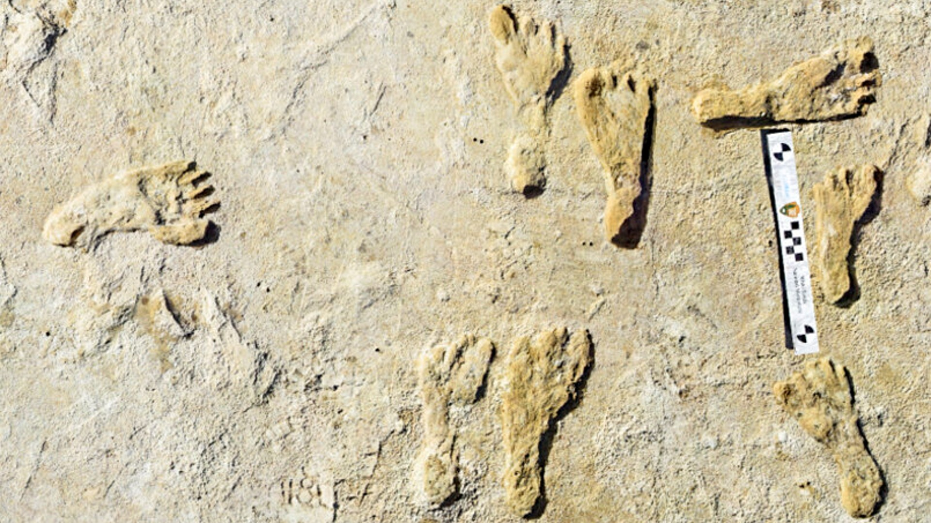 This undated photo made available by the National Park Service in September 2021 shows fossilized human fossilized footprints at the White Sands National Park in New Mexico. (NPS via AP)