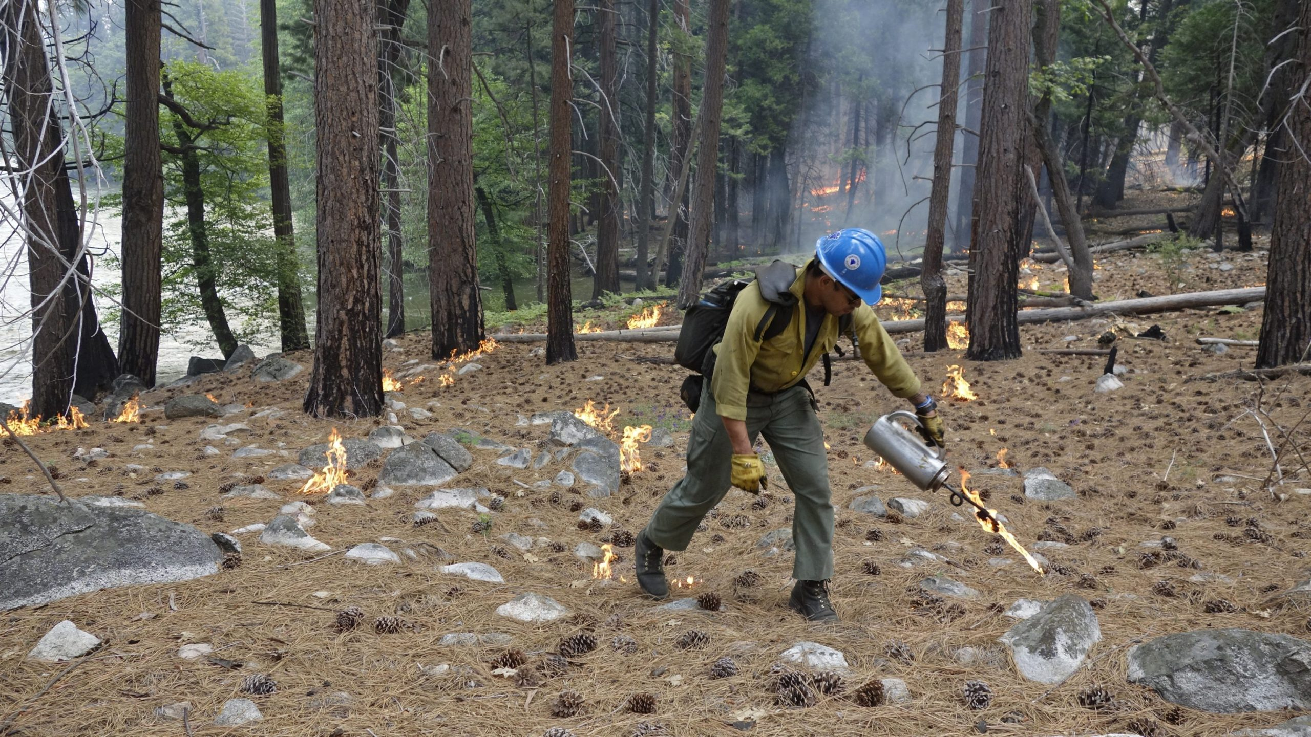 Firefighter Charles VeaVea pours flames from a drip torch near the Kings River during a prescribed fire in Kings Canyon National Park on June 11, 2019. (Brian Melley / Associated Press)